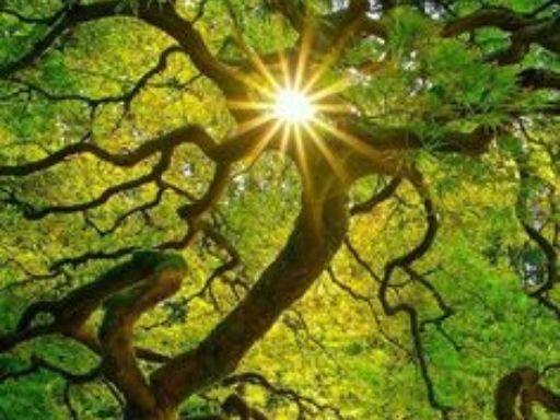 boom-bij-Coronatijdperk-JPEG-Centrum-Meander